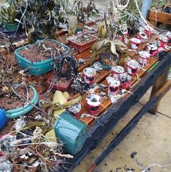 Greenhouse table Nov 6