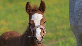 foal-5179358_1920.jpg