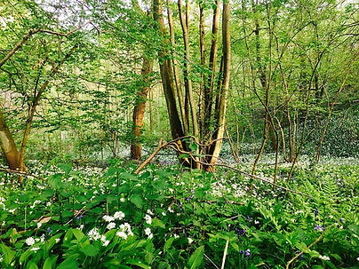 old-coppice.jpg
