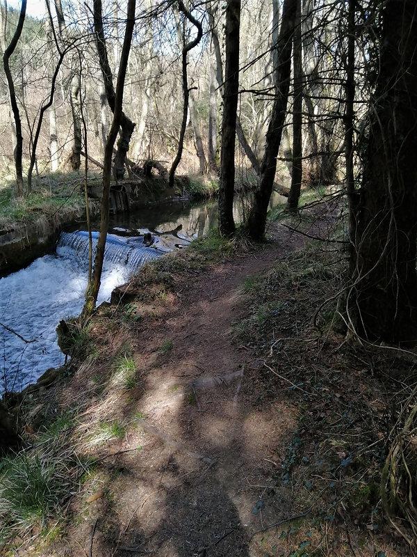 02 Thornton woods.jpg