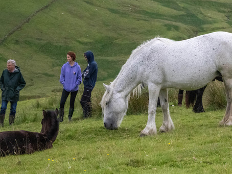 Fell Pony Heritage Trust Camping Weekend 2021