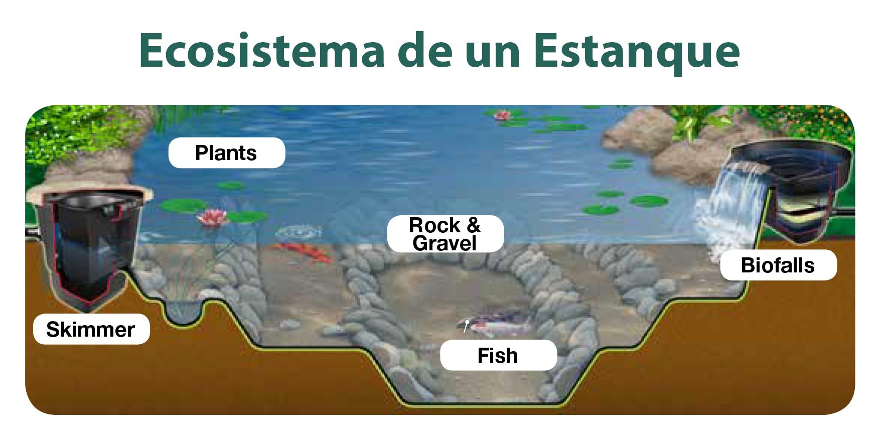 Ecosistema de un Estanque