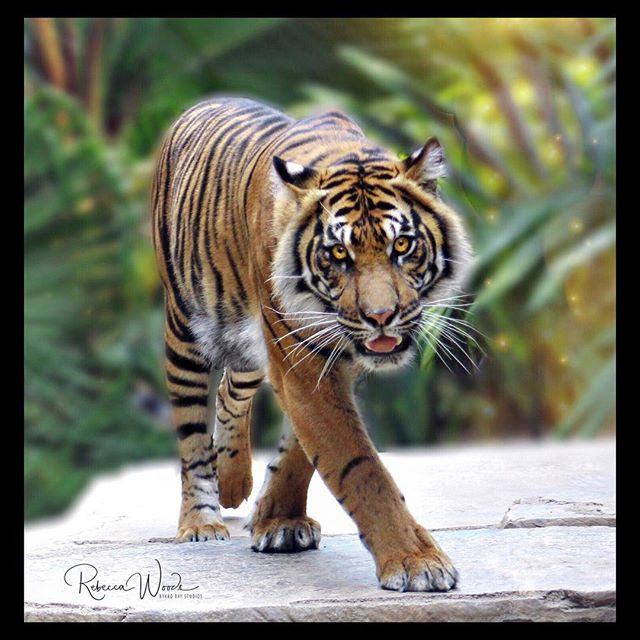 🐯Kicking off International Tiger Day wi