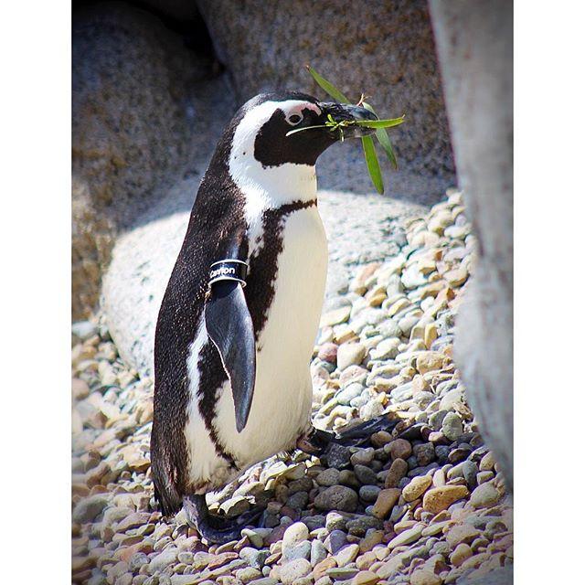 Caption This Photo! Happy World Penguin