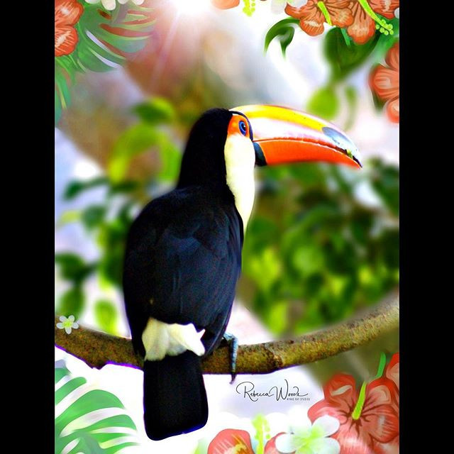 Toco Toucan Tuesday! 🌺Caught this guy i
