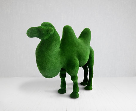 Camel (two-Humped)