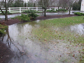 How to Fix Yard Drainage Issues