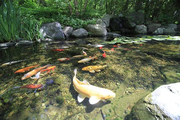 Milton GA Koi Pond Company
