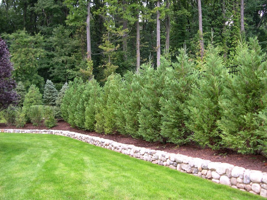 Best Trees And Shrubs For Privacy Screening In Cumming Ga