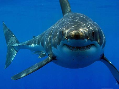 Does Mumford's New Album Jump the Shark?
