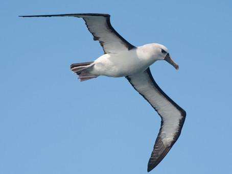 """New Music Monday: Albatross """"Burden To Bear"""""""