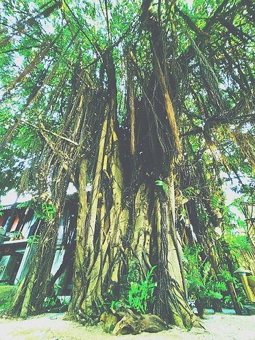 tree3_edited_edited.jpg