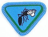 Ants_e-award_badge_medium.jpg