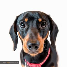 family pet portrait photography