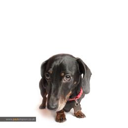 family pet portrait photography-001.JPG