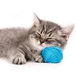 freeuse_sleepingcat.png