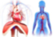 Atemtherapie Middendorf diagram.png.jpg