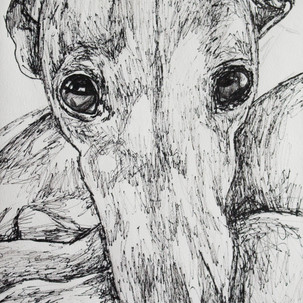 Greyhound Fineliner Drawing