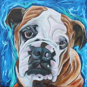 Hector The Bulldog
