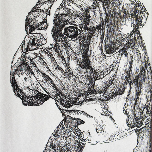 Boxer Fineliner Drawing