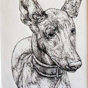 Pharaoh Hound Fineliner Drawing
