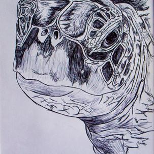 Turtle Biro Drawing