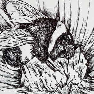 Bee Ink Drawing