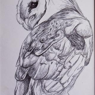 Barn Owl Biro Drawing