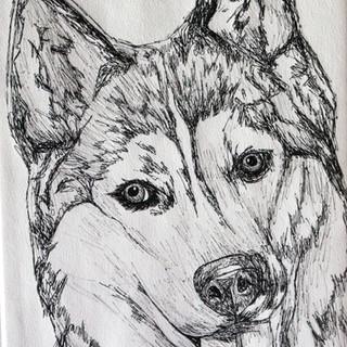 Husky Biro Drawing