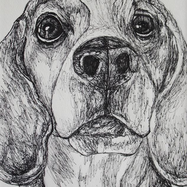 Beagle Fineliner Drawing