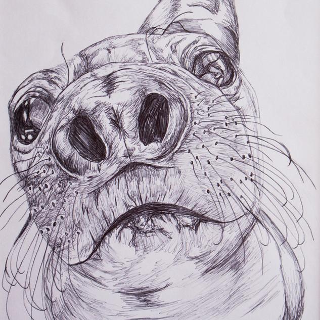 Seal Biro Drawing