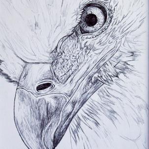 Eagle Biro Drawing