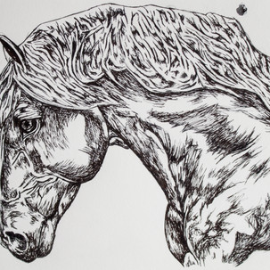 Horse Ink Drawing