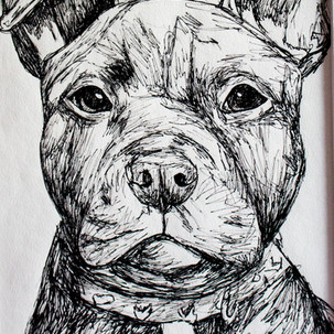 Staffordshire Bull Terrier Drawing  ORIGINAL Drawing Staffie image 0 Staffordshire Bull Terrier Drawing  ORIGINAL Drawing Staffie image 1 Staffordshire Bull Terrier Drawing  ORIGINAL Drawing Staffie image 2 Staffordshire Bull Terrier Drawing  ORIGINAL Drawing Staffie image 3 Staffordshire Bull Terrier Drawing  ORIGINAL Drawing Staffie image 4 Staffordshire Bull Terrier Drawing  ORIGINAL Drawing Staffie image 5 Staffordshire Bull Terrier Drawing  ORIGINAL Drawing Staffie image 6 Staffordshire Bull Terrier Drawing  ORIGINAL Drawing Staffie image 7 Staffordshire Bull Terrier Drawing  ORIGINAL Drawing Staffie image 8 Staffordshire Bull Terrier Drawing  ORIGINAL Drawing Staffie image 9 ArtbylouiseShop Local seller | 12 sales 12 sales | 5 out of 5 stars      Staffordshire Bull Terrier Fineliner Drawing