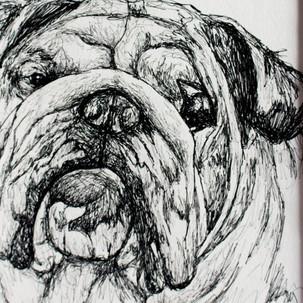 Bulldog Fineliner Drawing