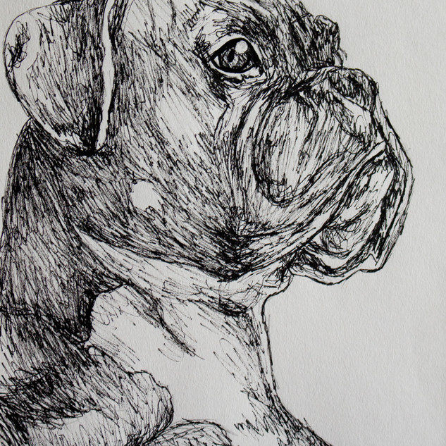 Boxer II Fineliner Drawing