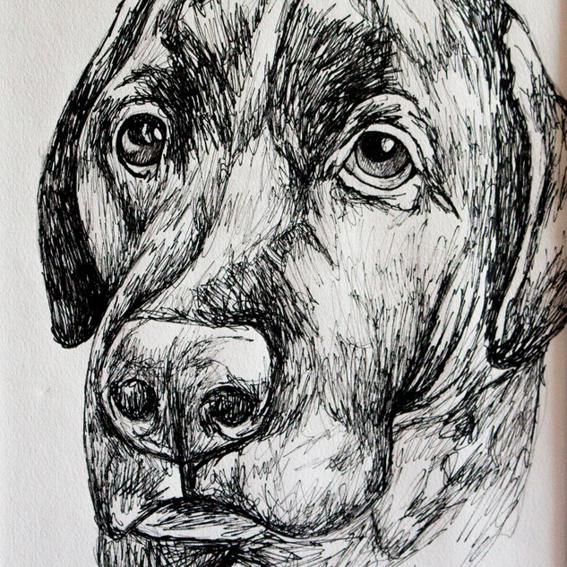 Labrador Fineliner Drawing
