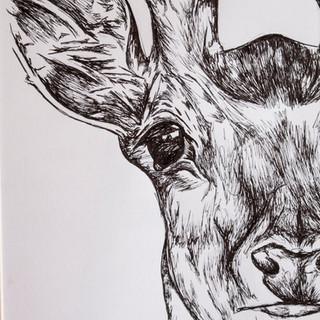 Deer ink drawing