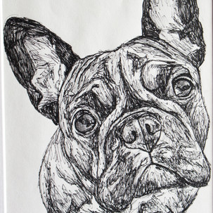French Bulldig Fineliner Drawing