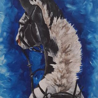 Coloured Horse