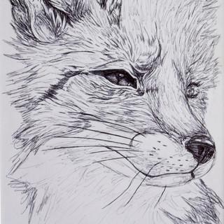 Fox Biro Drawing
