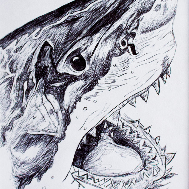 Great White Shark Biro Drawing