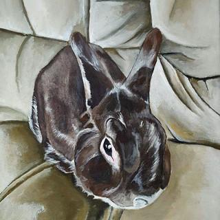 Babbit the Rabbit