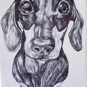 Dachshund Biro Drawing