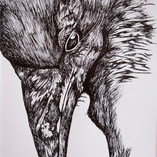 Raven Ink Drawing
