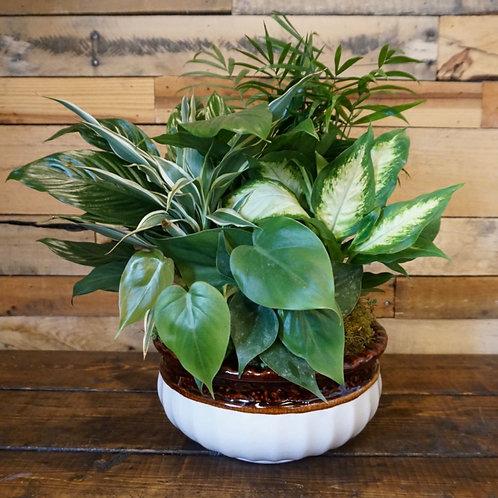 """Combination Planter 10"""" Ceramic"""