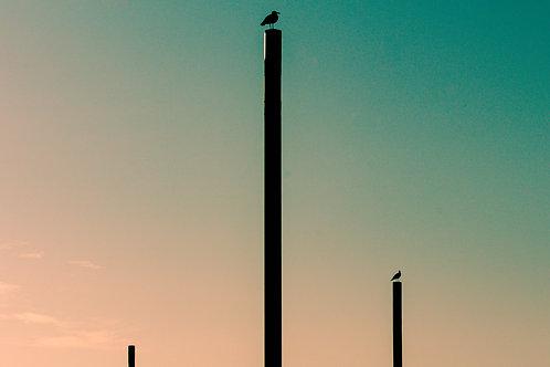 Saúde Beach Birds
