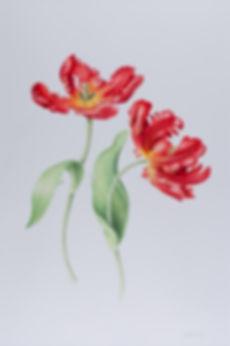 Parrot Tulip. Ruth Wharrier.jpg