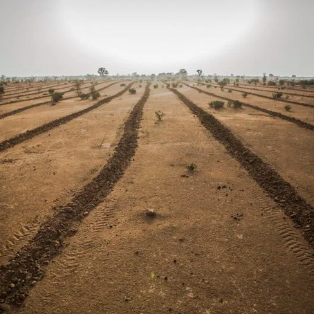 The Great Green Wall breathes life back into the desert