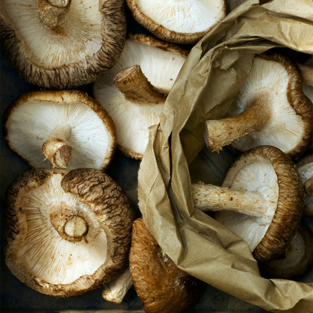 Boost your immune system with mushies